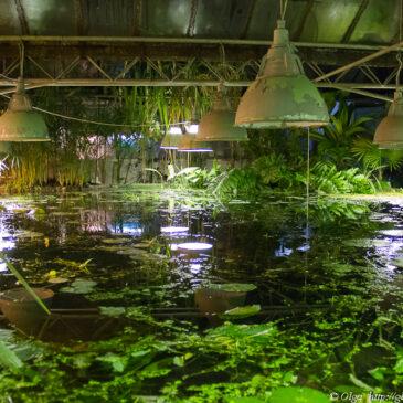 Казкові тропіки посеред міста – водні оранжереї ботсаду ім. Фоміна