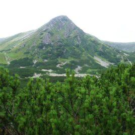 Чорногора і Свидовець