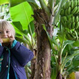 Ананаси бананаси