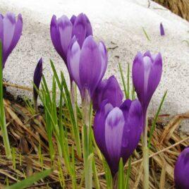 Майже весна