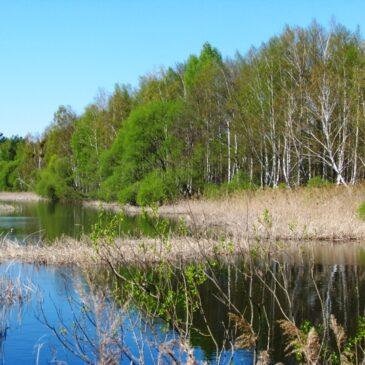 Весна у Поліському заповіднику